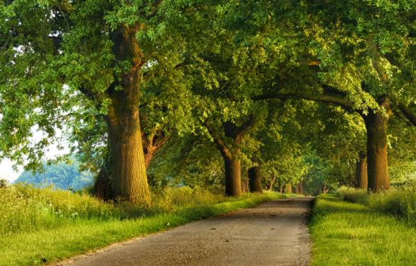 Con đường xanh