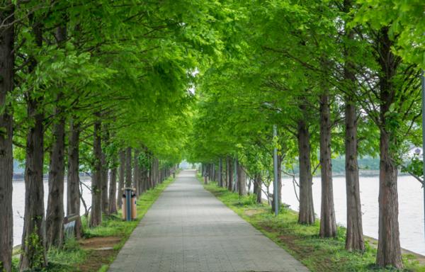 Hàng cây xanh