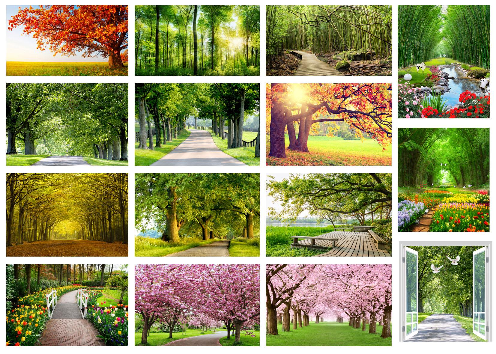 Hàng cây đẹp